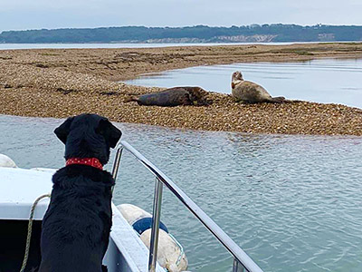 Hurst Castle Dog on ferry looking at seals