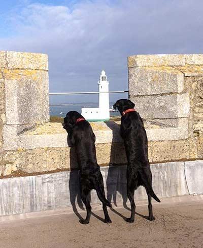 Hurst Castle Dogs looking over parapet